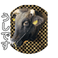 うしちゃん(黒毛和牛)