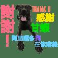 blackdog dundun
