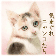 A capricious cat -Commonly used phrases-