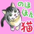 Nohohon kittens