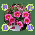 HUANG SHU CHIAO_20190308220234
