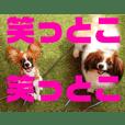 ファレーヌめい&パピヨンとわのスタンプ③