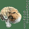 猫学部教授 山田モフ夫 ②