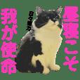 kuro cat RETURNS