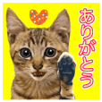 Sweet Brown tabby Cat's stickers