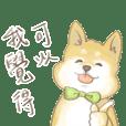 柴犬皮卡布2