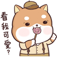Shiba Inu PIPI's life(3)