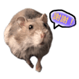 小鼠の鼠生