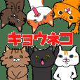 kyoxxxxx's cats