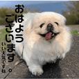 dogs sticker (shitateyejingoro)