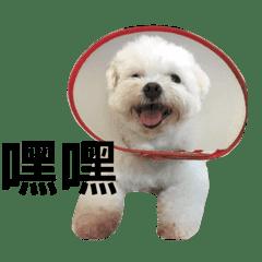 馬爾濟斯—狗b(日常篇)