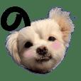 Dog & A I U E O   (2)