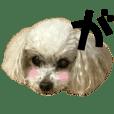 Dog & A I U E O   (3)