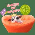 Sugar glider muji&family [ver. Eng]