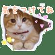 Cute cat Sticker. Munchkin