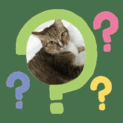 Cat_20190321100458