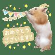 ハムスター オセロくん&チーズJrくん Vol.2
