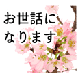 A floral message! Cherry Blossoms