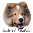 Shelties' pawpaw daily life. v1.0