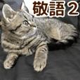 minuet kitten Chocolate PhotoSticker8