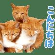 Cat familys Vol.3 [Honorific]