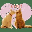ねこ蔵ホステルの保護猫3