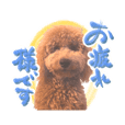Kofu Mogi dog