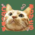 猫 ねこ ネコ cat 敬語 リアル スタンプ