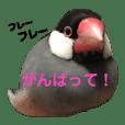Satchan_20190328150132