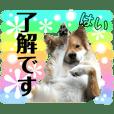 癒し犬ココ6 敬語だワン!
