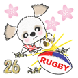 Shih Tzu dog ,Spring(RUGBY)vol.26