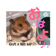 my cute hamsters(Lv.4)