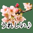 暮らしに花を♪桜 Part2