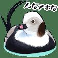 Japanese bird 5