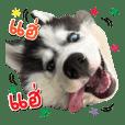 KAOJAO DOG