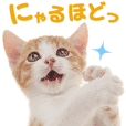 Cat stickers for cats lover