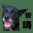 台灣黑狗 歐告生活集2