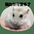 Hamster funny life