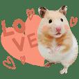 鼠寶的快樂小天地 (多多、庫莉姆、胖肉肉)