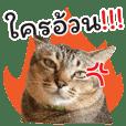 Chokdee Cat - Ao Nang Miti