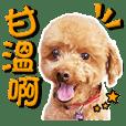 Poodle Underbite- Thank you mom