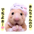LoveKinchan. Hamster Kintaro's cute day.