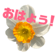 japanese flower stamp(^^)