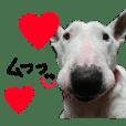 lovely dog miniture bull terrier