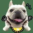 FrenchBulldog_Angu