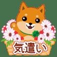 "Shiba dog ""MUSASHI"" 21 Care"