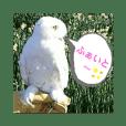 白フクロウ's ②