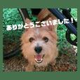 テリア犬の丁寧なスタンプ