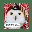 白フクロウ's ④