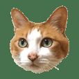 猫のチョロちゃん